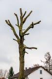 Tronco de árbol con las ramas aserradas-apagado Fotos de archivo libres de regalías
