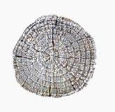 Tronco de árbol cubierto con hielo Foto de archivo