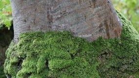 Tronco de árbol cubierto de musgo Imágenes de archivo libres de regalías