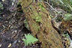 Tronco de árbol cubierto de musgo Fotografía de archivo