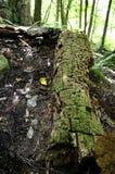 Tronco de árbol cubierto de musgo Foto de archivo