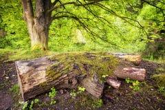 Tronco de árbol cubierto de musgo en el bosque Foto de archivo libre de regalías