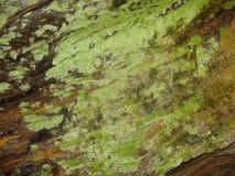 Tronco de árbol cubierto por el musgo Fotos de archivo libres de regalías