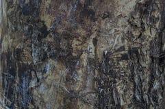 Tronco de árbol dañado por el escarabajo de corteza Imágenes de archivo libres de regalías
