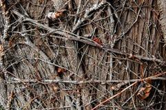 Tronco de árbol de madera de la textura fotografía de archivo