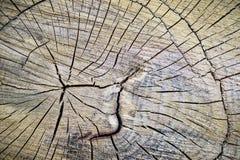 Tronco de árbol de madera del corte de la textura Imágenes de archivo libres de regalías