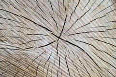 Tronco de árbol de madera del corte de la textura Fotografía de archivo libre de regalías