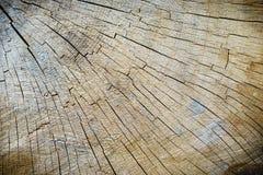 Tronco de árbol de madera del corte de la textura Fotos de archivo libres de regalías