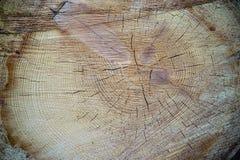 Tronco de árbol de madera del corte de la textura Fotos de archivo