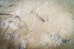 Tronco de árbol de madera del corte de la textura Foto de archivo libre de regalías