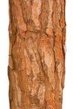 Tronco de árbol de pino Imagen de archivo libre de regalías