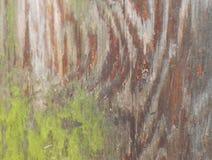 Tronco de árbol de pino con el musgo Imagen de archivo libre de regalías