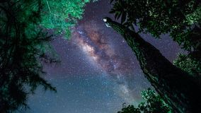 Tronco de árbol debajo del cielo de la vía láctea fotos de archivo