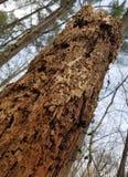 Tronco de árbol decaído en el bosque imagenes de archivo