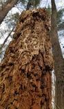 Tronco de árbol decaído en el bosque fotos de archivo