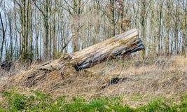 Tronco de árbol decaído pescado con caña para arriba Fotografía de archivo libre de regalías