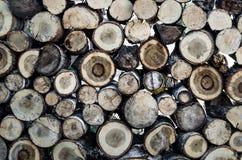Tronco de árbol del corte de la sierra Fotografía de archivo