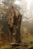 Tronco de árbol del otoño fotos de archivo