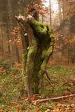 Tronco de árbol del otoño foto de archivo libre de regalías