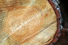 Tronco de árbol después de ser cortado Imágenes de archivo libres de regalías