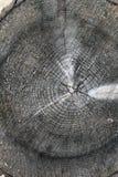 Tronco de árbol después de ser cortado Imagen de archivo
