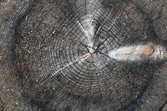 Tronco de árbol después de ser cortado Fotografía de archivo libre de regalías