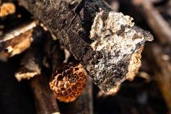 Tronco de árbol - detalle foto de archivo