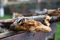 Tronco de árbol - detalle imagenes de archivo