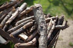 Tronco de árbol - detalle fotografía de archivo libre de regalías