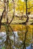Tronco de árbol en agua imagen de archivo libre de regalías