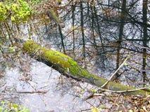 Tronco de árbol en agua Fotos de archivo libres de regalías