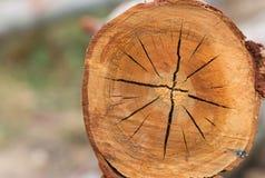 Tronco de árbol en bosque tropical en Tailandia Fondo de la naturaleza Imagen de archivo