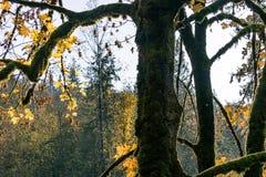 Tronco de árbol en caída foto de archivo