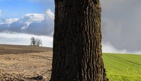 Tronco de árbol en campo imágenes de archivo libres de regalías
