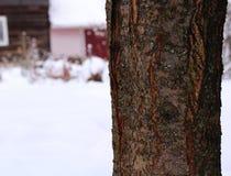 Tronco de árbol en el fondo Foto de archivo