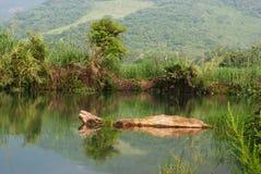 Tronco de árbol en el lago Fotos de archivo libres de regalías