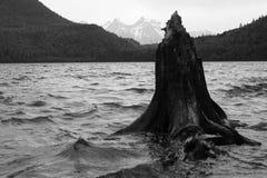 Tronco de árbol en el lago hicks A.C. Imagen de archivo