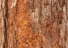 Tronco de árbol en el parque Imagen de archivo libre de regalías