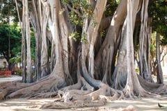 Tronco de árbol en la ciudad de Palermo en Giardino Garibaldi Fotografía de archivo