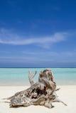 Tronco de árbol en la playa Imagen de archivo