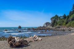Tronco de árbol en la playa Fotografía de archivo