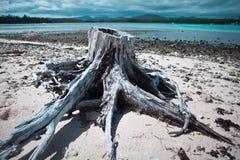 Tronco de árbol en la playa Foto de archivo