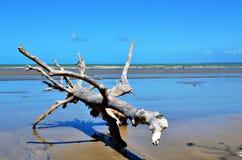 Tronco de árbol en la playa Imagenes de archivo