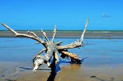Tronco de árbol en la playa Fotografía de archivo libre de regalías