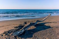 Tronco de árbol en la playa en Toscana Imagen de archivo