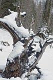 Tronco de árbol en nieve del th Fotos de archivo libres de regalías