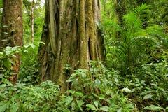 Tronco de árbol en selva tropical Foto de archivo