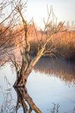 Tronco de árbol en una mañana escarchada en la salida del sol que refleja en Fotos de archivo