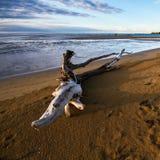 Tronco de árbol en una playa Fotos de archivo libres de regalías