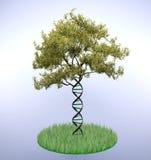 Tronco de árbol formado DNA Fotos de archivo libres de regalías